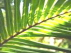 PALM SUNDAY PASSION SUNDAY HOLY WEEK CALENDAR OF EVENTS
