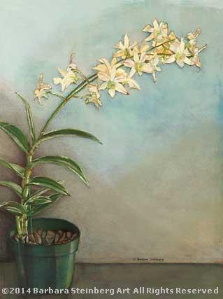 White Dendrobian Orchids